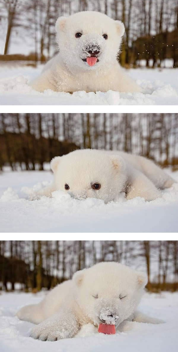 first snow and all the sweet reactions 12 pics 4