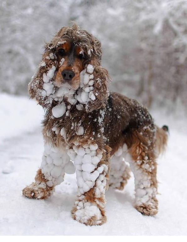 first snow and all the sweet reactions 12 pics 5