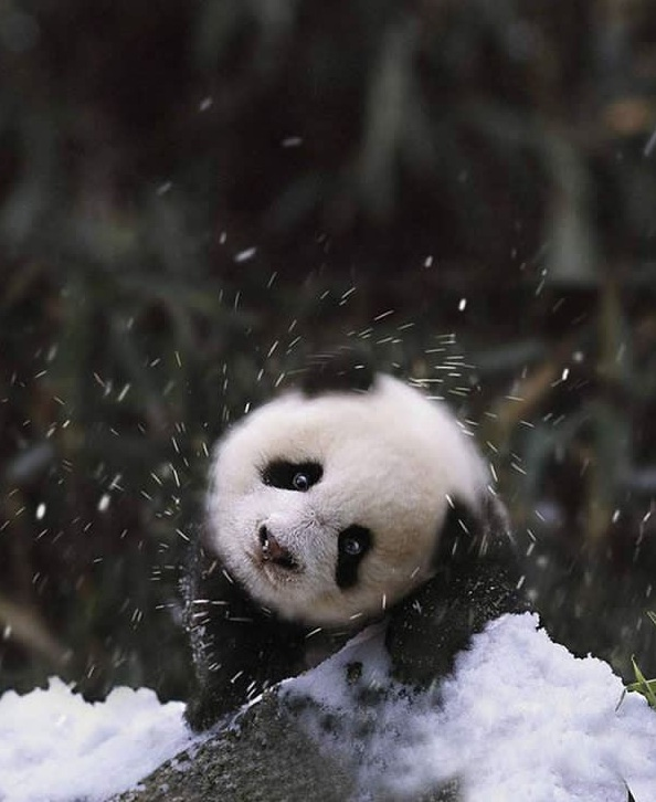 first snow and all the sweet reactions 12 pics 7