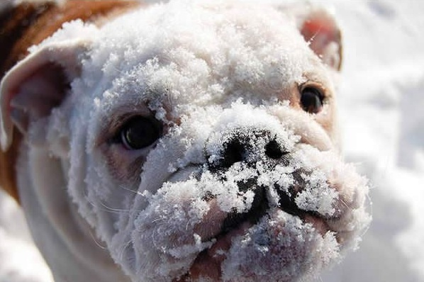 first snow and all the sweet reactions 12 pics 8
