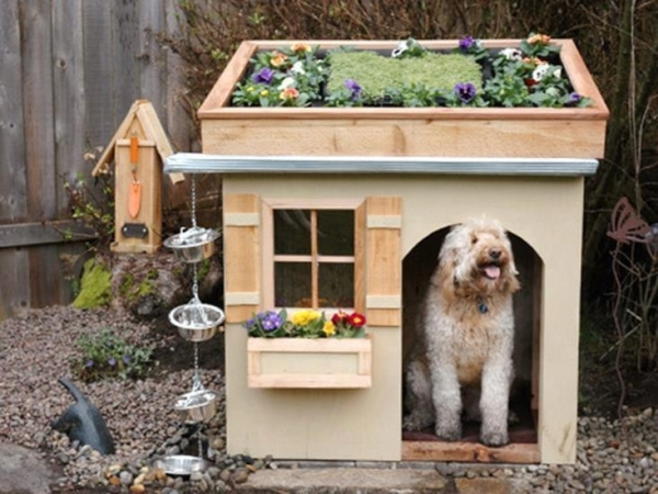 five star pet houses 14 pictures 1