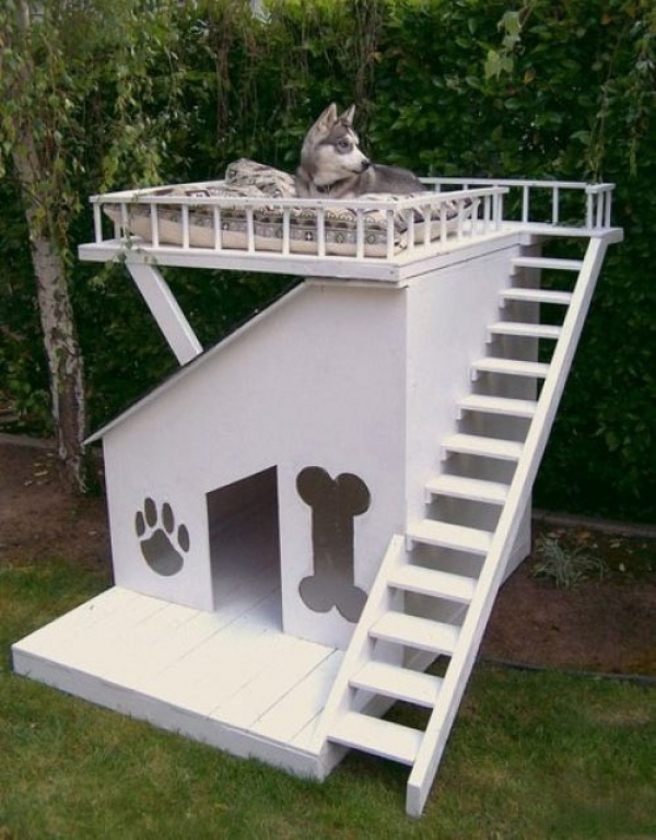 five star pet houses 14 pictures 10