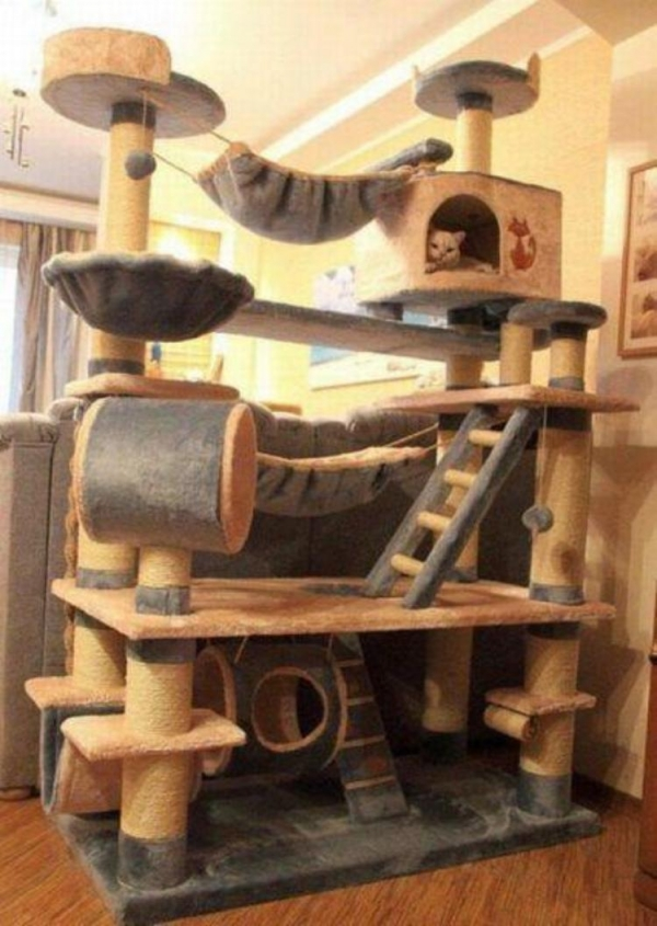 five star pet houses 14 pictures 2