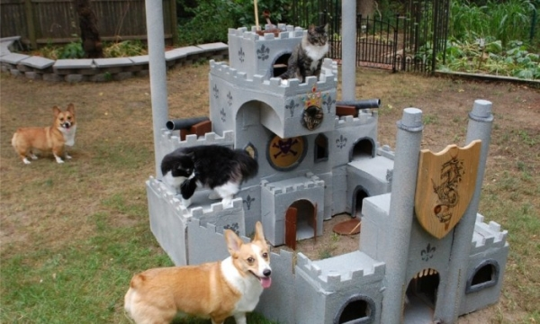 five star pet houses 14 pictures 8