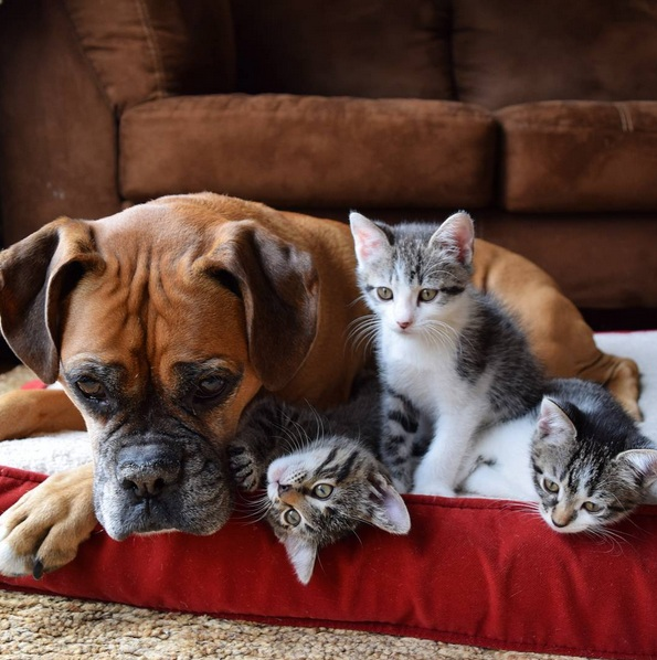 foster kittens and their cute mom  14 pictures 11