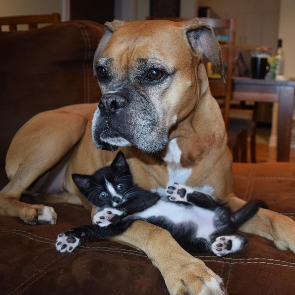 foster kittens and their cute mom  14 pictures 7