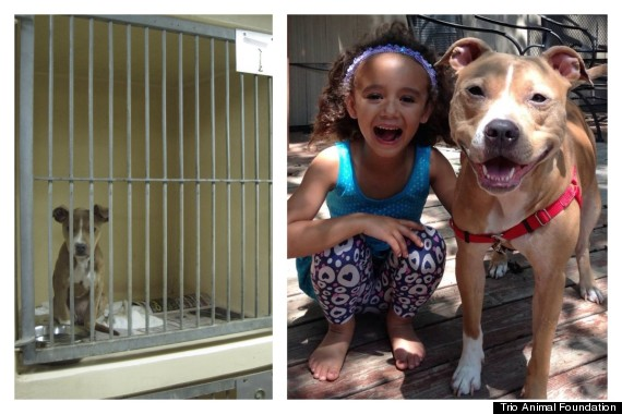 foundation that saved many more than these 12 dogs 11