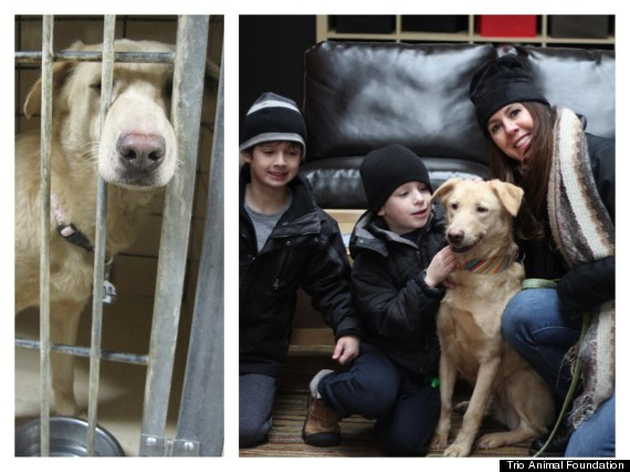 foundation that saved many more than these 12 dogs 5