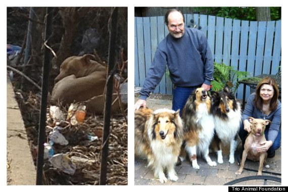 foundation that saved many more than these 12 dogs 7