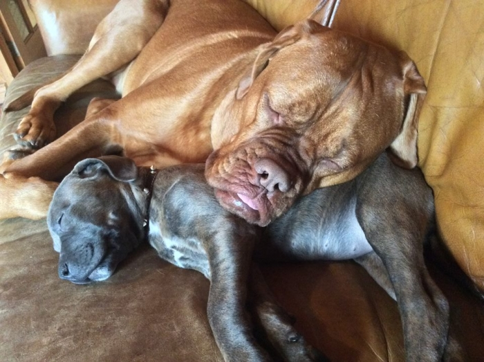 Author: Roxanne Bourgie, Description: These two dogs relying on each  other so they could nap as true friends do.