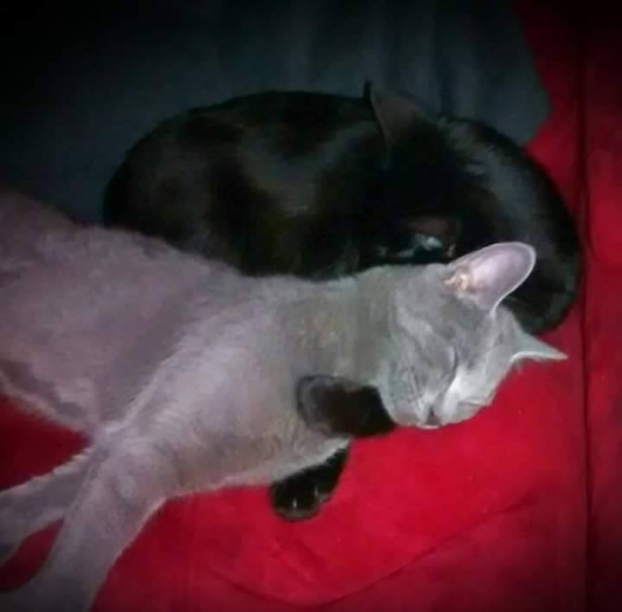 Author: Stacey Lynn, Description: Grey kitty came to the black kitty as a real friend and has relied on it.