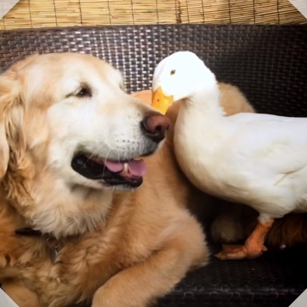 from enemies to friends adorable story about weird friendship 10 pictures 7