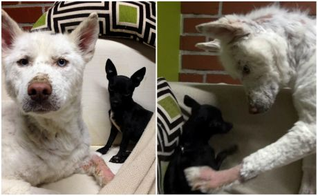 from garbage to loving home story of survival in 17 pics 11