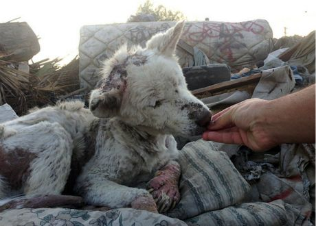 from garbage to loving home story of survival in 17 pics 3