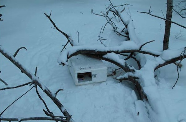 from wilderness and frozen styrofoam to loving and warm home 14 pics 2
