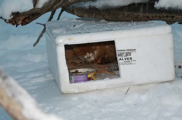 from wilderness and frozen styrofoam to loving and warm home 14 pics 3