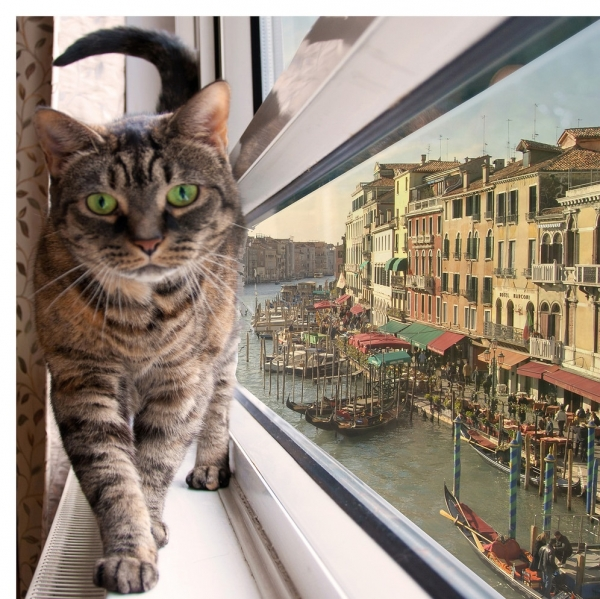 global cat mania 9 curious cat stories from all around the world 11