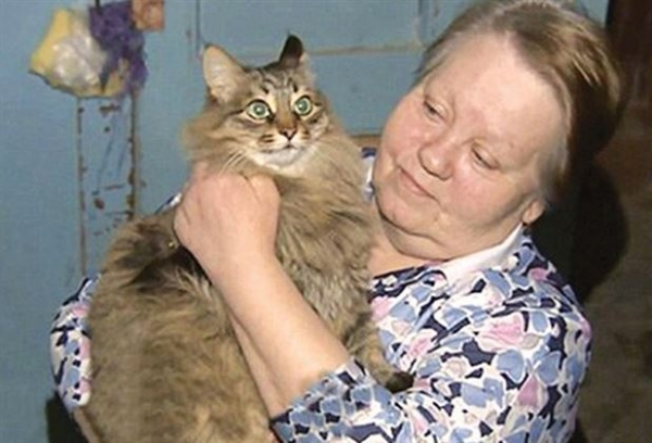 global cat mania 9 curious cat stories from all around the world 3
