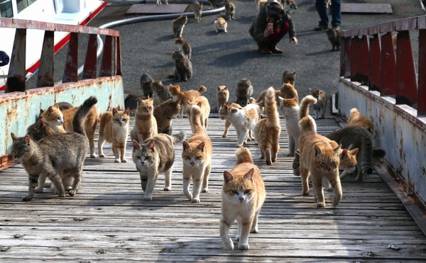 global cat mania 9 curious cat stories from all around the world 4