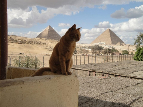 global cat mania 9 curious cat stories from all around the world 5