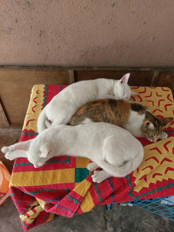 global cat mania 9 curious cat stories from all around the world 8
