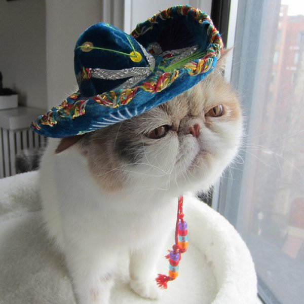 global cat mania 9 curious cat stories from all around the world 9