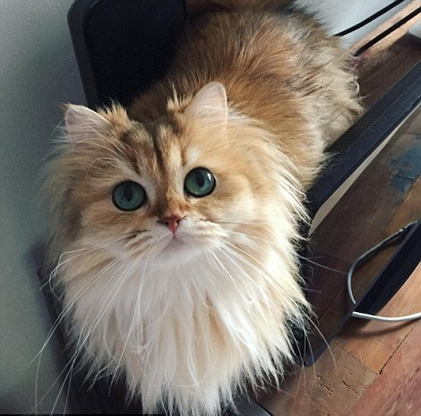 greeneyed model cat named smoothie 11 pictures 9