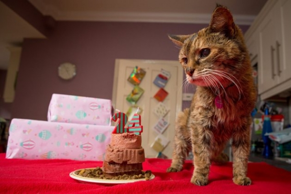 happy birthday to the oldest living cat 8 pics 8