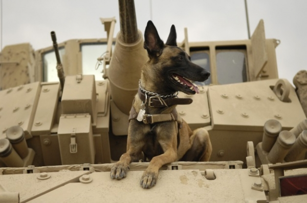 heroic hearts of our fourlegged companions 10 pictures 4