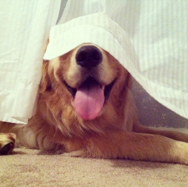 hiding is not one of their stronger sides 12 pics 9