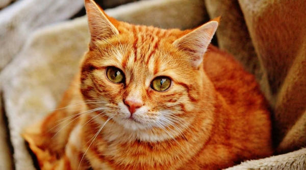 history of cats how did cats become our pets 13 pictures 12