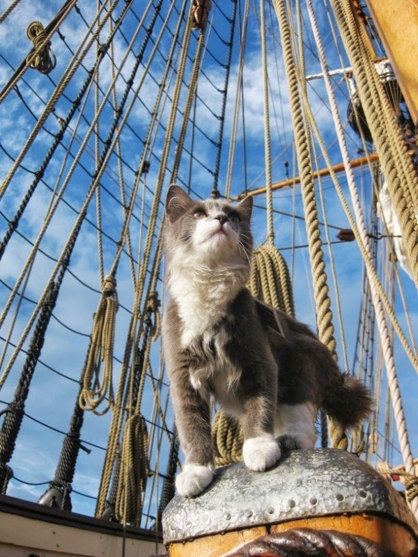 history of cats how did cats become our pets 13 pictures 6