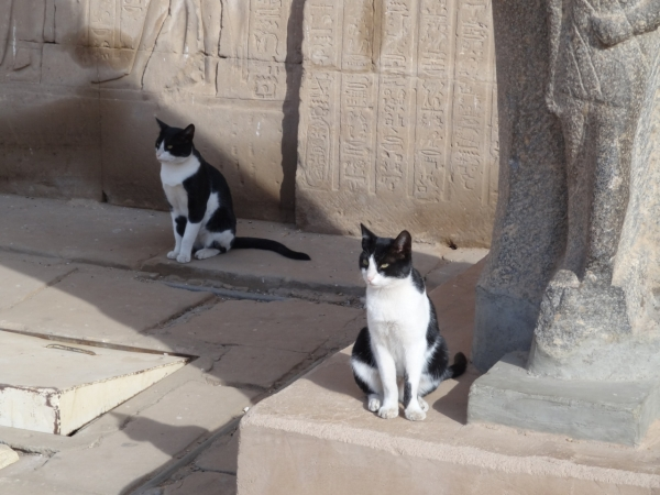 history of cats how did cats become our pets 13 pictures 7