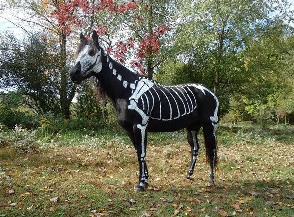 horse costumes living a day in your fantasy 24 pics 10