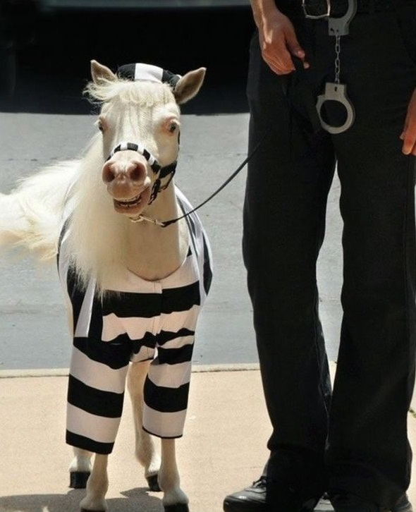 horse costumes living a day in your fantasy 24 pics 17