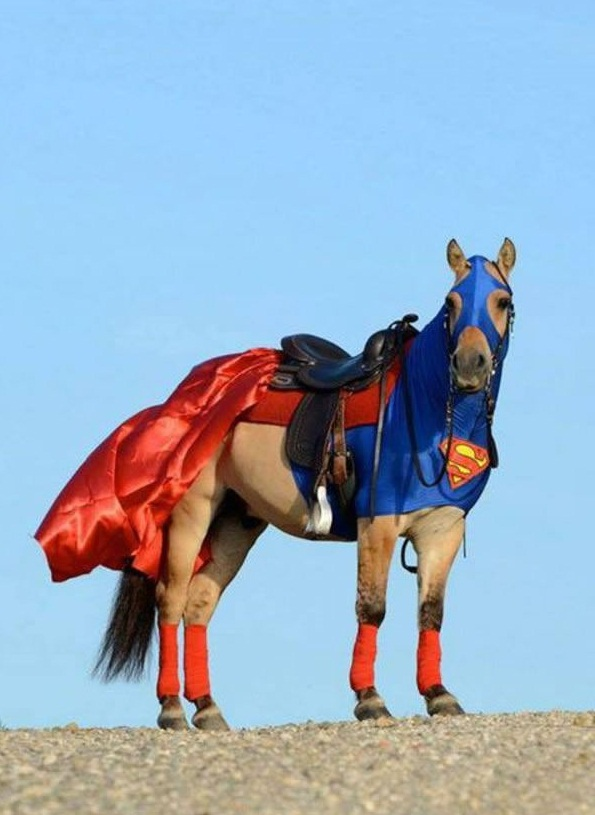 horse costumes living a day in your fantasy 24 pics 19