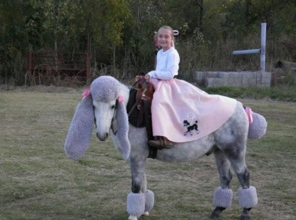 horse costumes living a day in your fantasy 24 pics 22