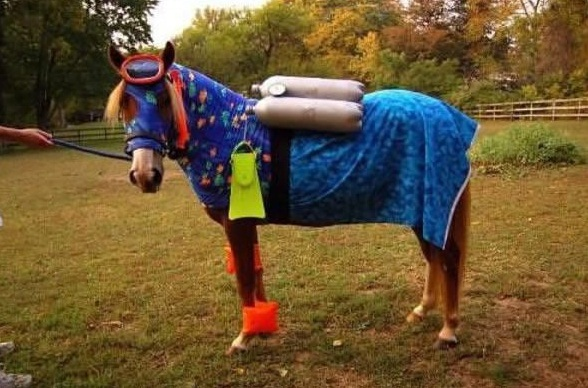 horse costumes living a day in your fantasy 24 pics 24