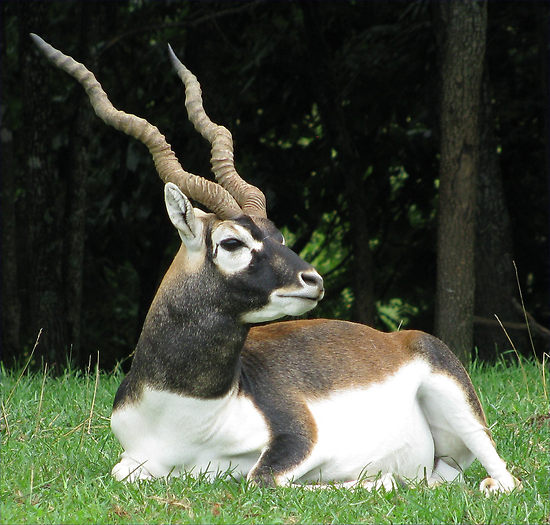how brave must you be to come close to these horned animals 12 pictures 1