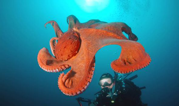 how much do you know about the octopus 8 interesting facts 6