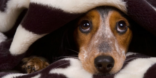 how to make your pets life easier during winter 10 pictures 1