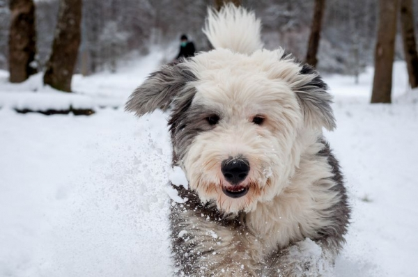 how to make your pets life easier during winter 10 pictures 4