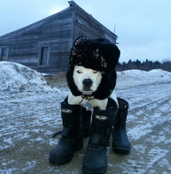how to make your pets life easier during winter 10 pictures 5