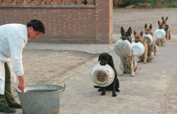 how well trained is your dog 11