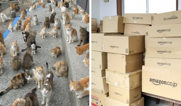 if youre a cat person than this is what heaven looks like 12 pictures 11