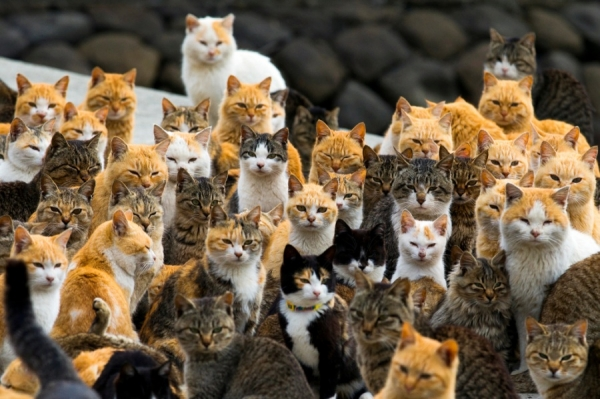 if youre a cat person than this is what heaven looks like 12 pictures 4
