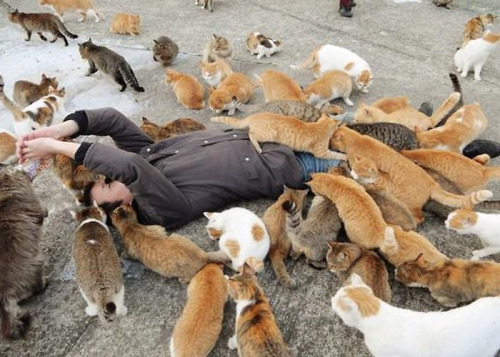if youre a cat person than this is what heaven looks like 12 pictures 6