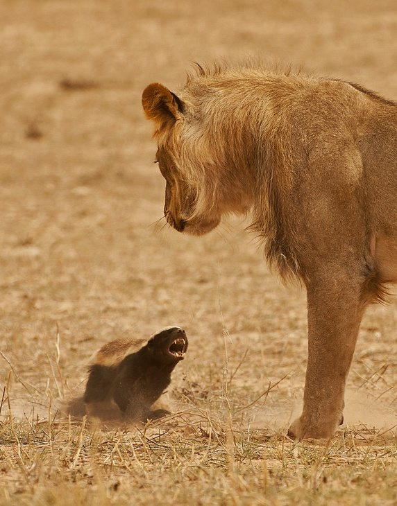 important life lessons we can learn from animals 9 pictures video 4