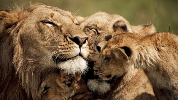 important life lessons we can learn from animals 9 pictures video 5