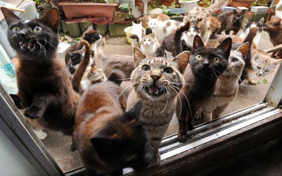 is this the cat heaven 10